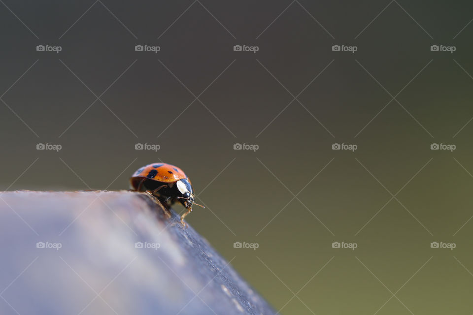 Ladybug on the fence post