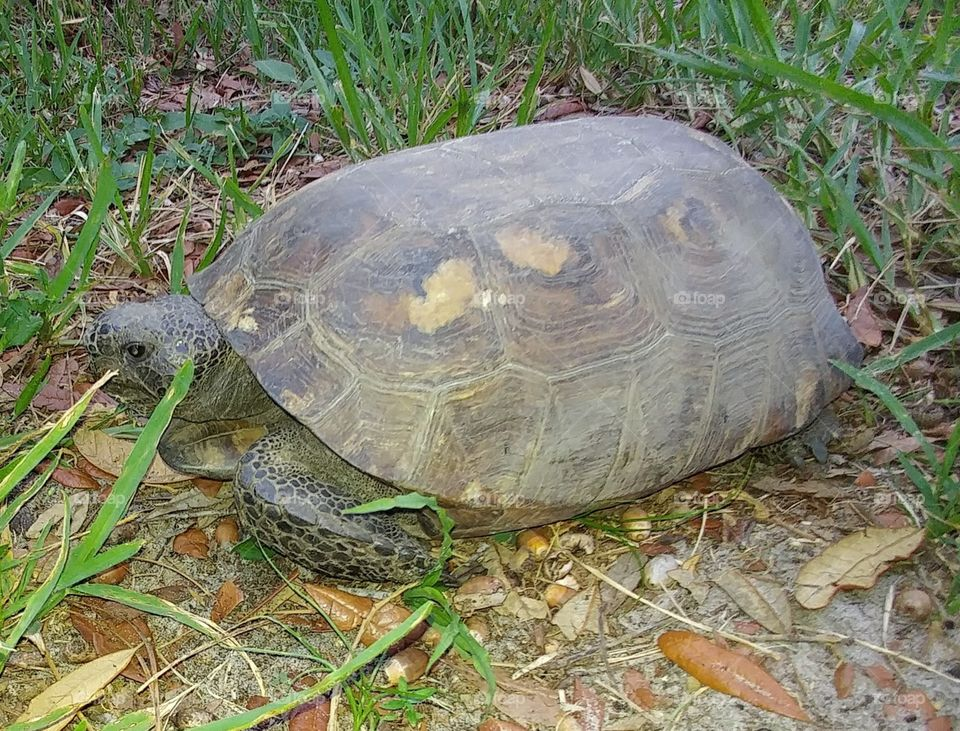 Tortoise in my yard