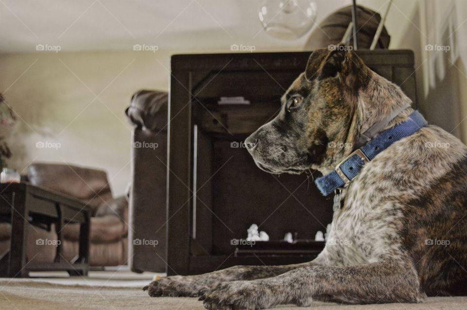 Dogg Daze 🐾