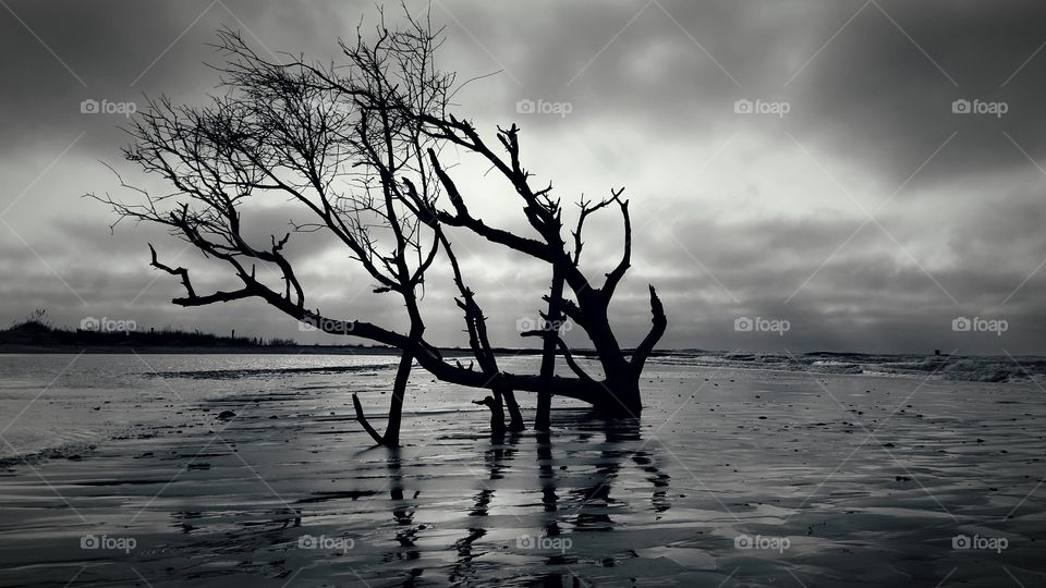 Silhouette of tree in sea