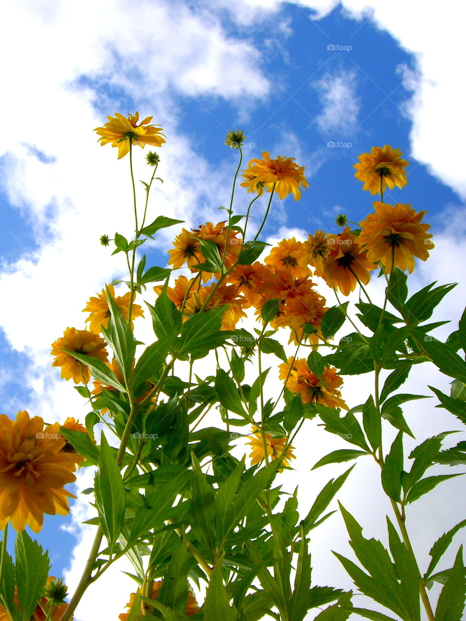 Yellow flowers on the background of sky with clouds
