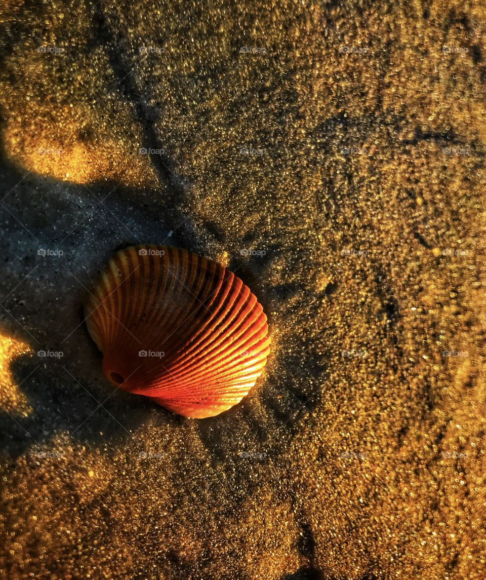 Seashell on the beach—taken in St. Augustine, Florida