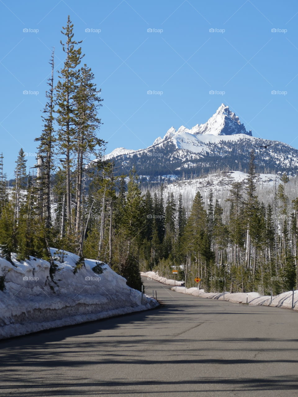 The magnificent snow covered Three Fingered Jack in Oregon's Cascade Mountain Range against a clear blue sky on a beautiful spring day.