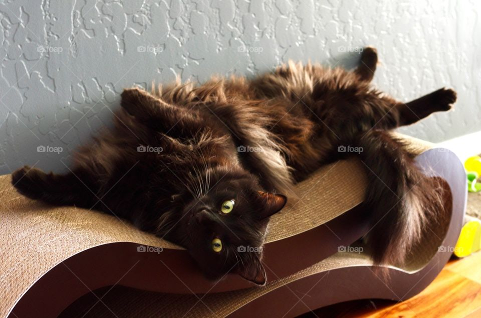 My cat relaxing on his cat scratcher.