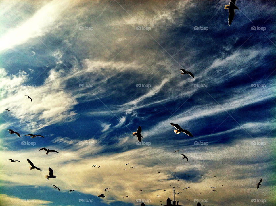 sky clouds birds peace by oaslani