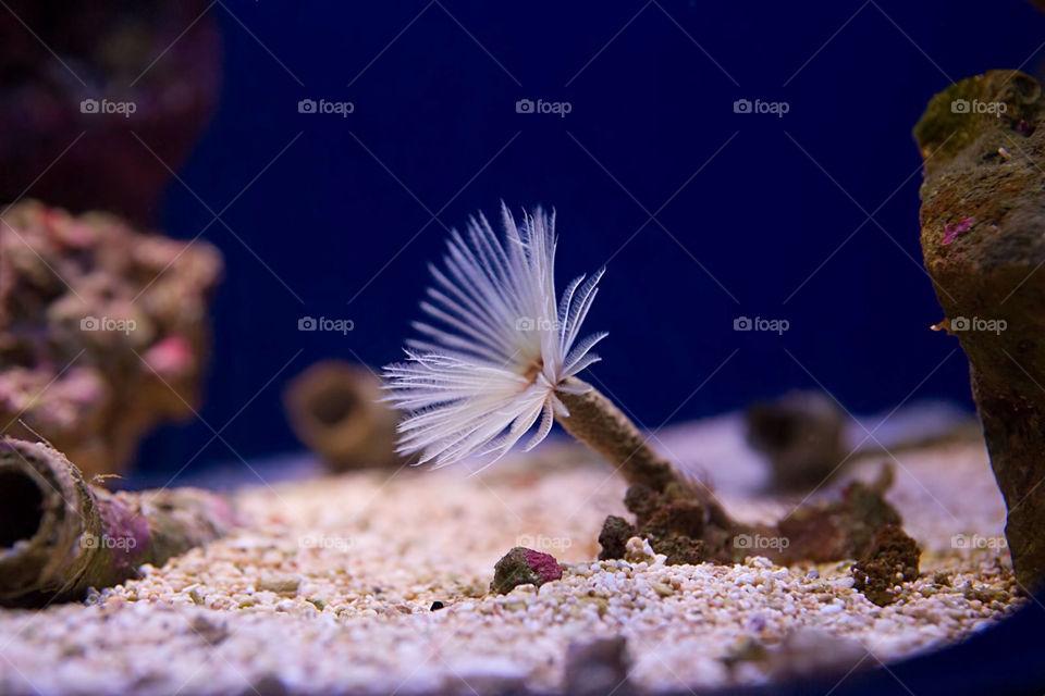 stockholm vatten underwater aquaria by cekari