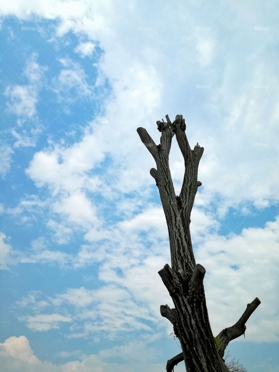sky, wood, trees, no person, beautiful day,