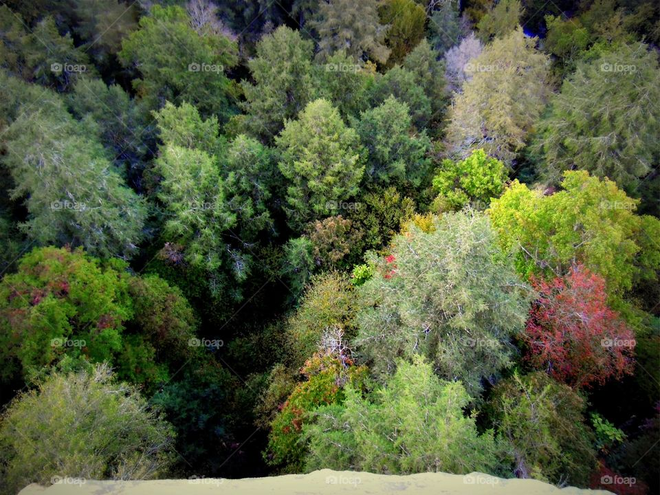 Looking down at the tree tops from a cliff above them