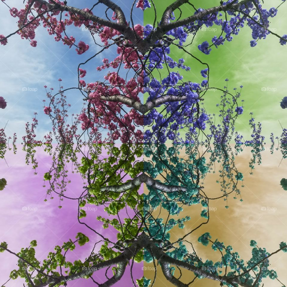 Tree, Flora, Flower, Nature, Desktop