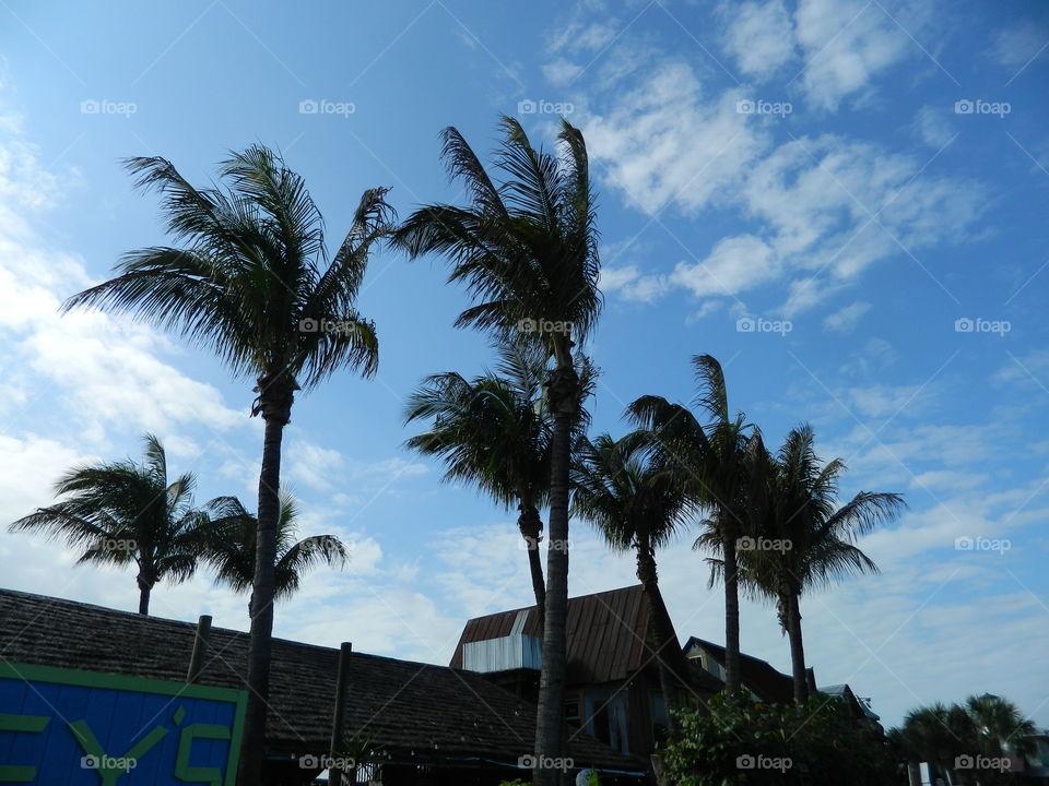 A Palmy Day