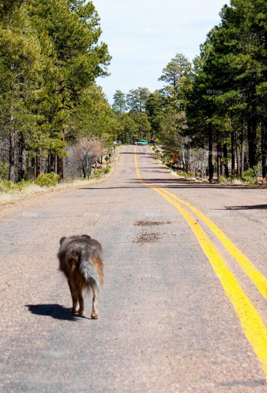 Dog escaping down the road