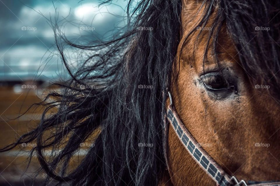 The eye of a horse and mane in the wind