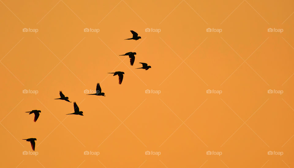 Silhouette of birds flying in sky