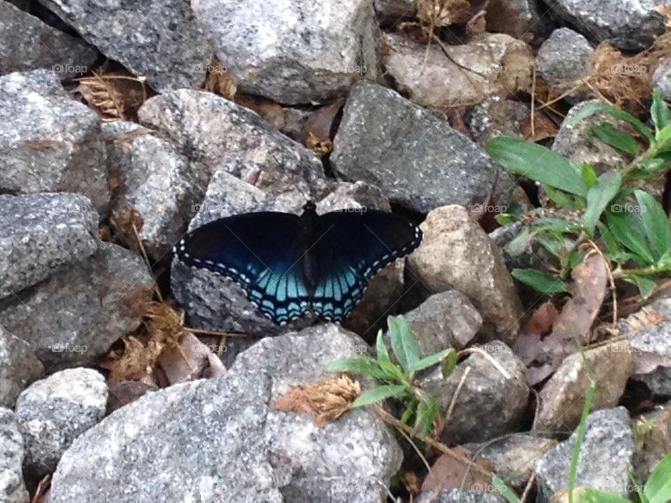 On the Rocks. Butterfly on the rocks