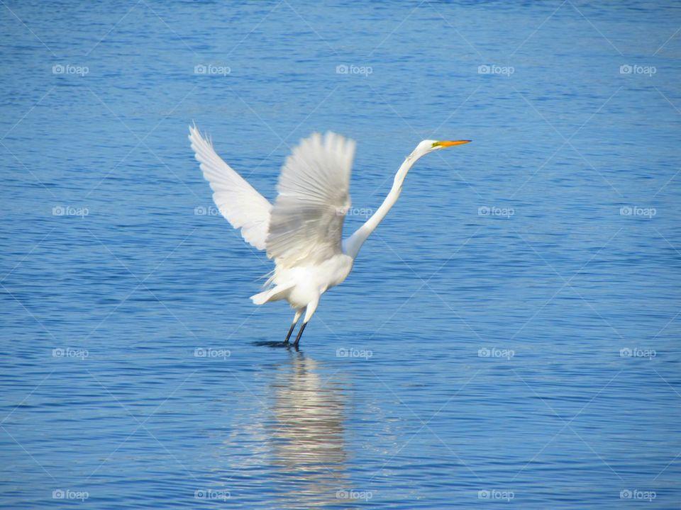 Bird in sea