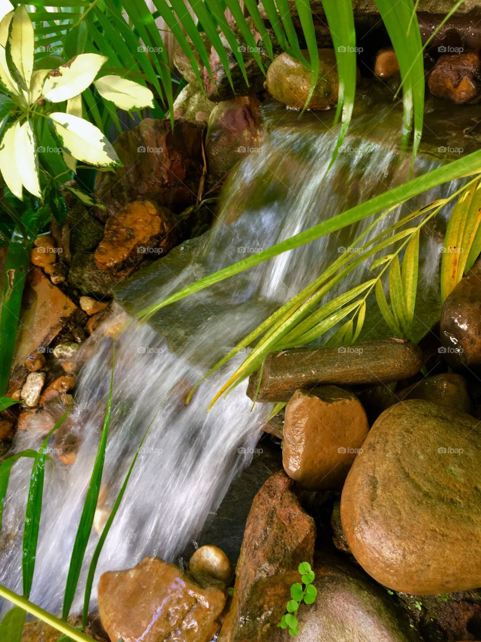 Waterfall and palm.