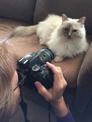 Taking picture of a cat