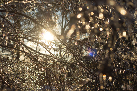 Backlit branches, encrusted with ice