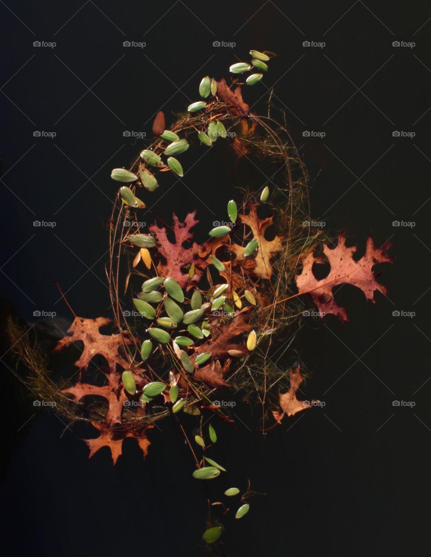 Watery  Wreath