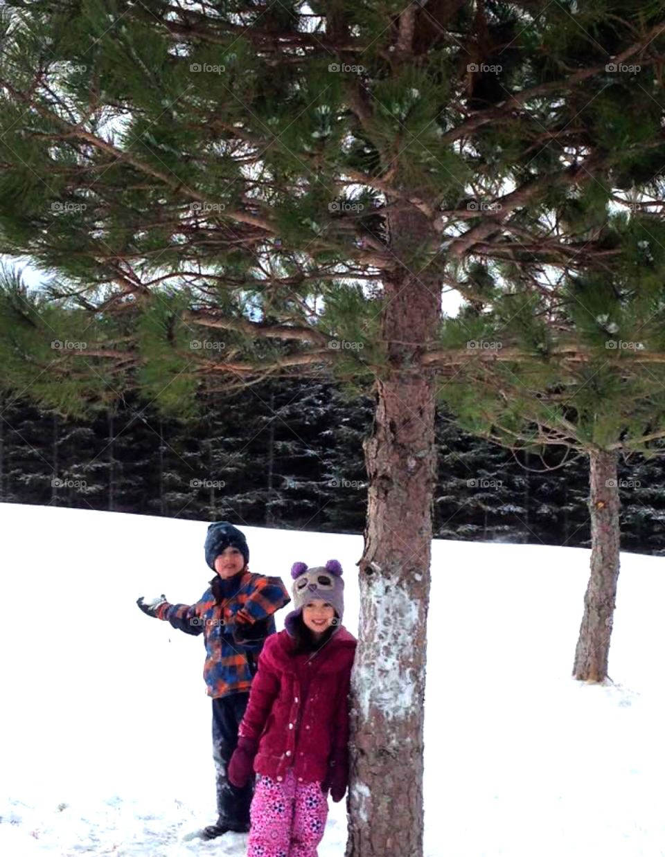 Kids playing in the snow standing under a pine tree. Boy ready to throw a snowball.