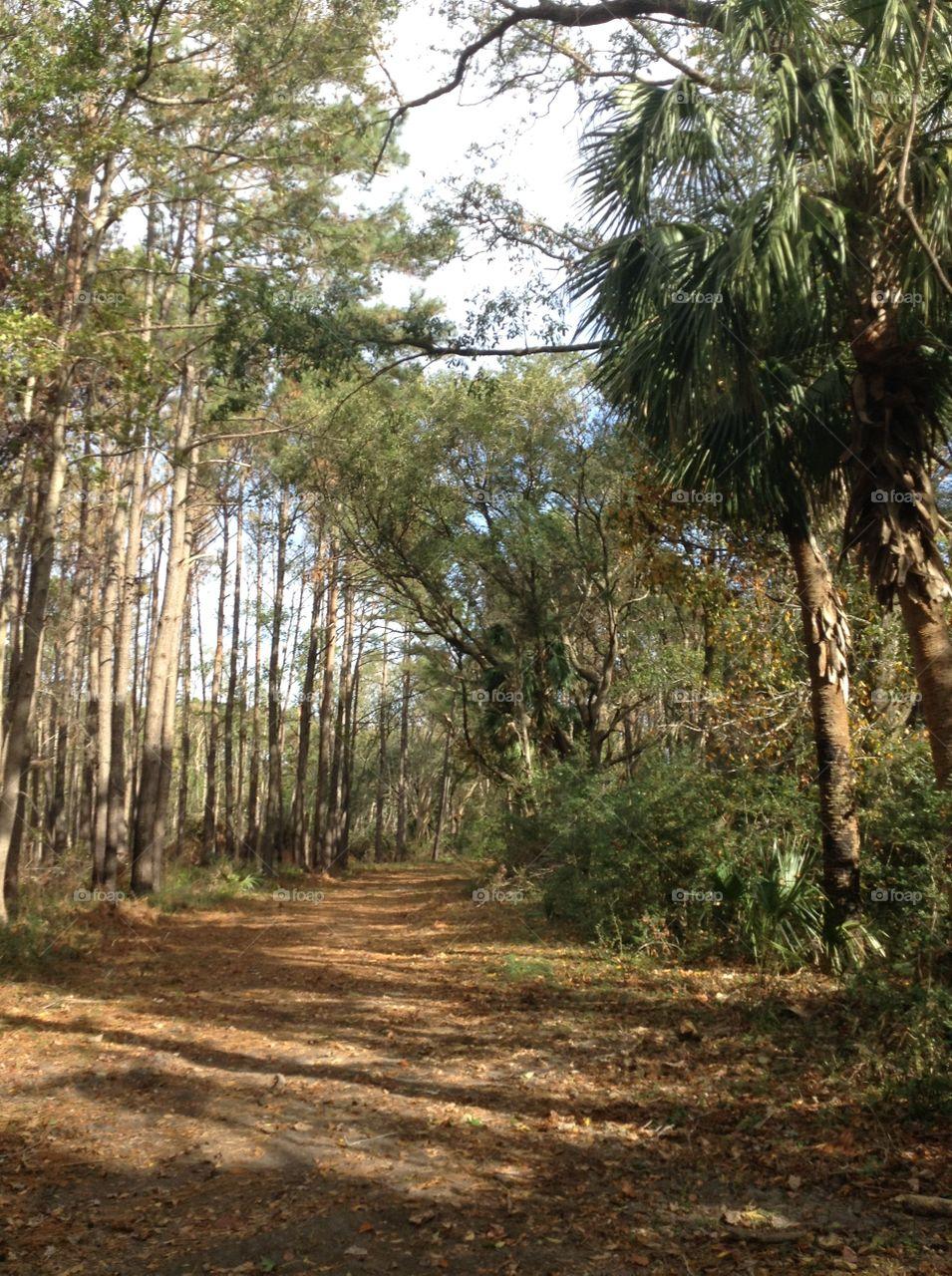 Pickney Wildlife refuge, South Carolina