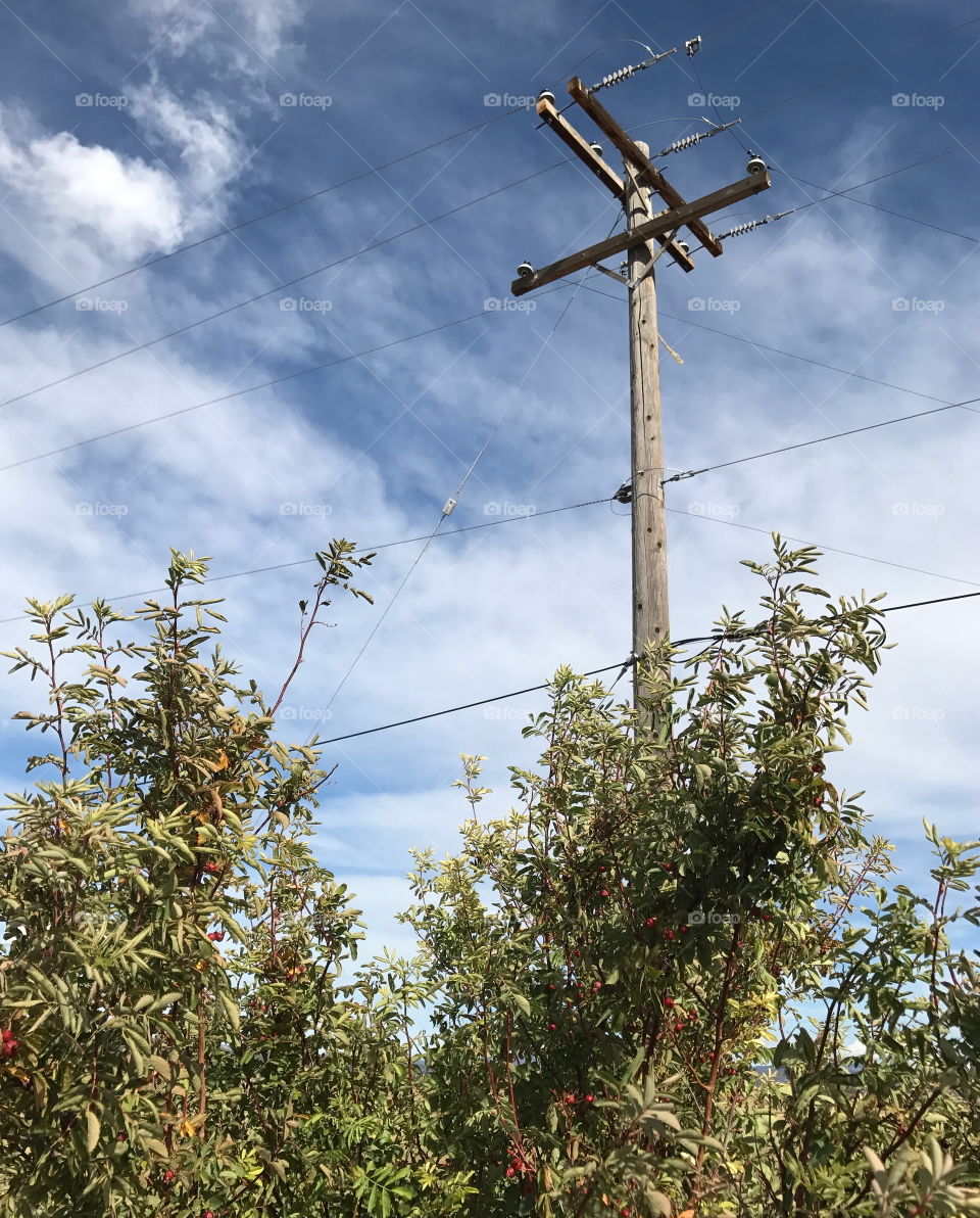 An electric poll rises out of the brush against a blue sky on a beautiful fall day in Central Oregon.