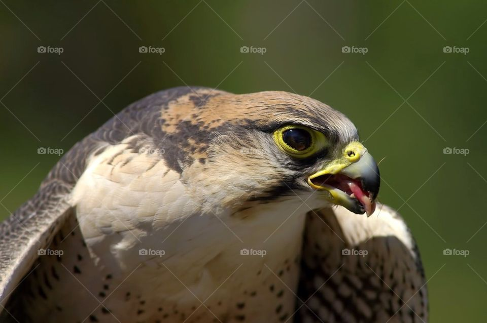 nature bird life fågel by cekari