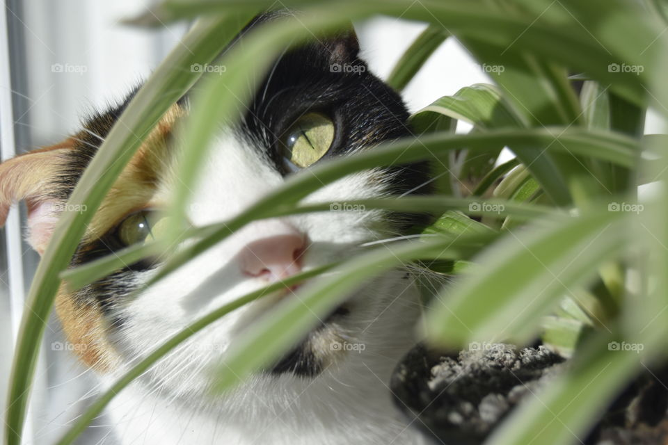 A cat looking through a spider plant