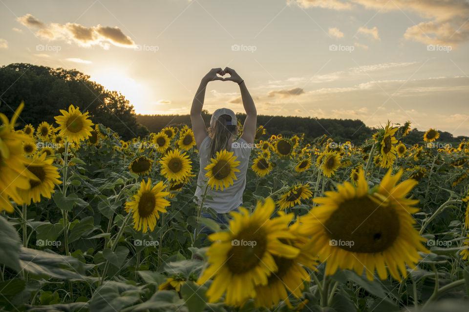 Sunflower love