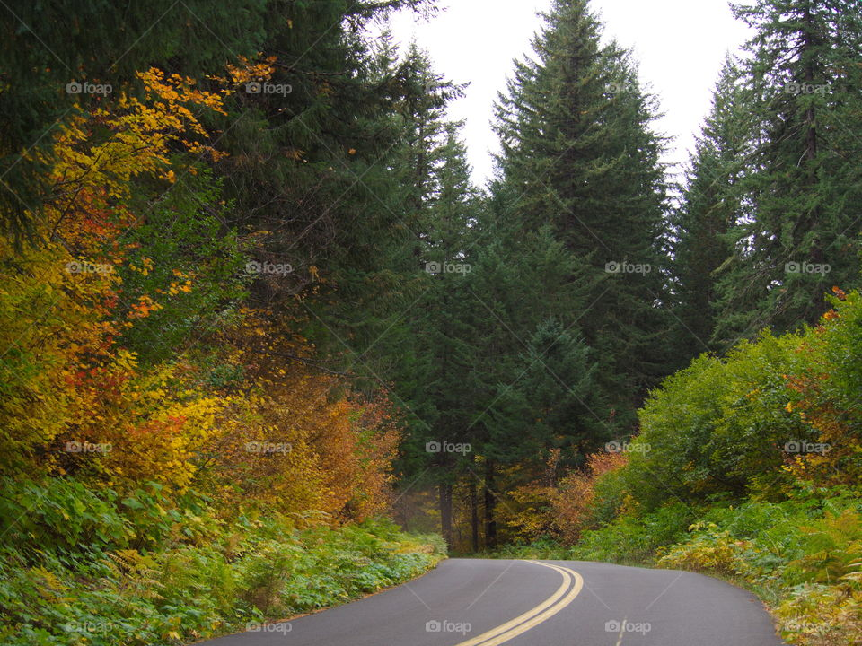 A road leads into lots of beautiful fall colors