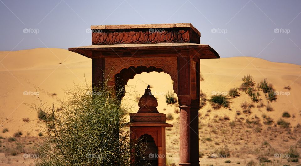 Desert Bird, Thar Desert, India . Desert bird on Shrine