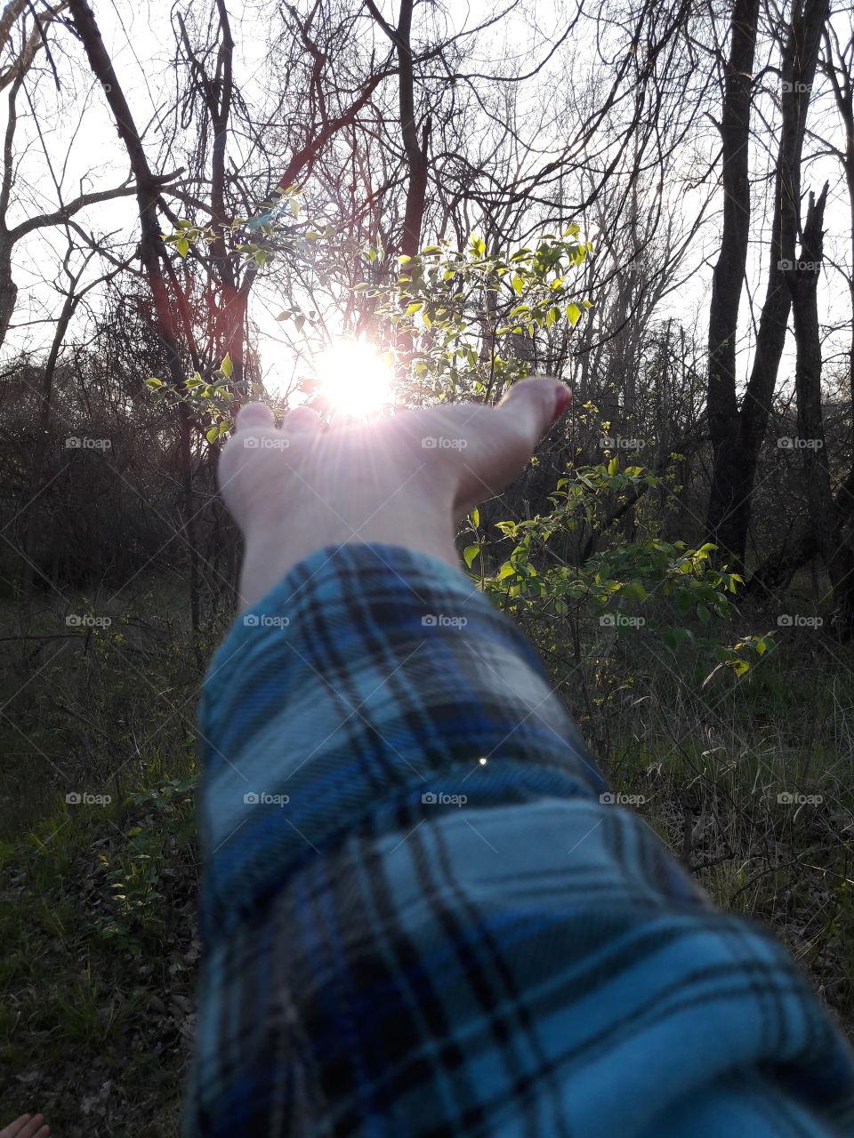 Holding the Woodland Sun