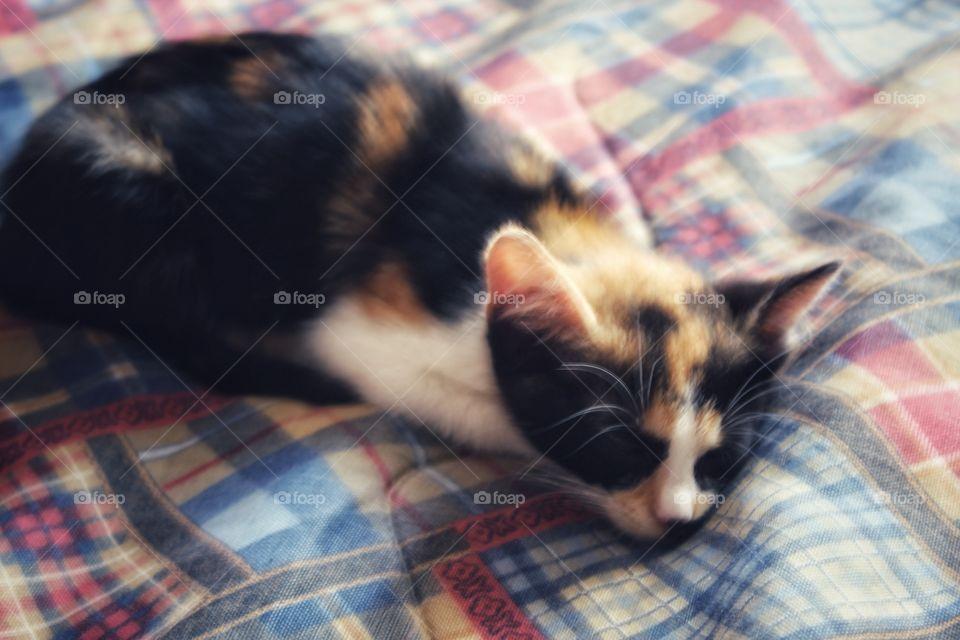 a little sleepy kitty.