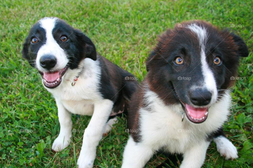 Dogs on grassy field