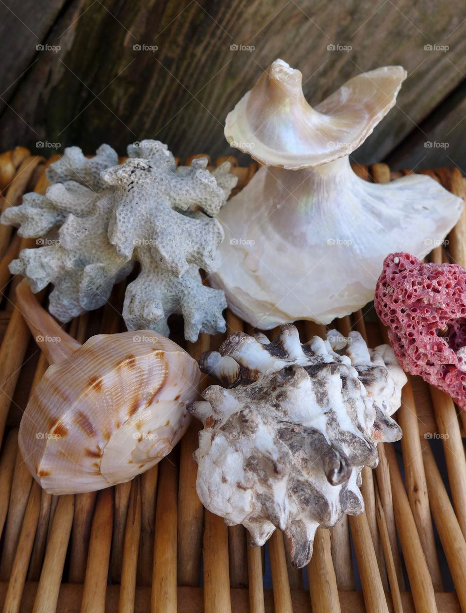 seashells on wicker with coral