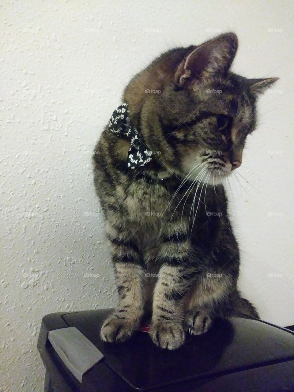 A beautiful older cat named Elsi