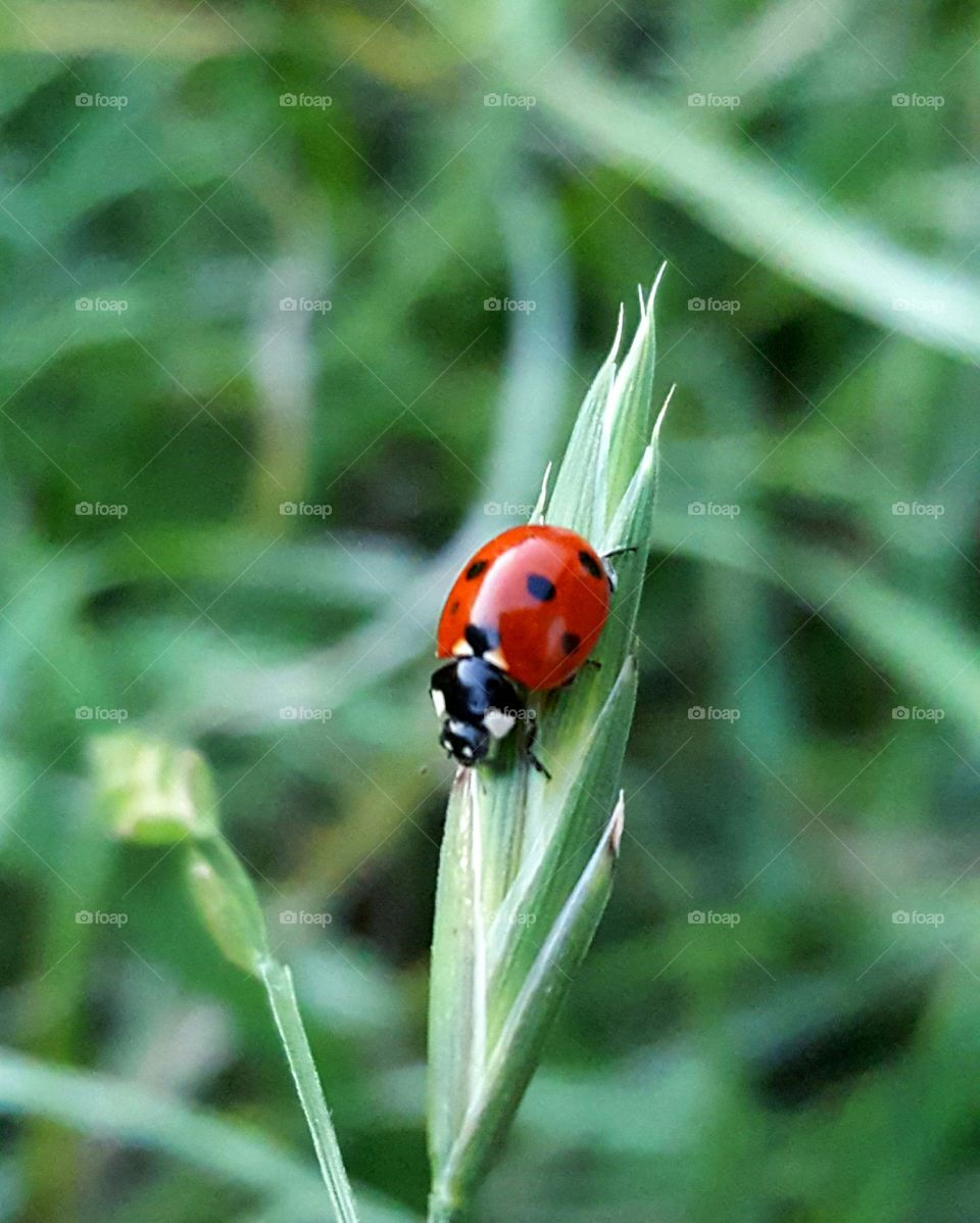 Elevated view of ladybird
