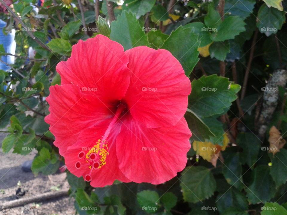 Flor vermelha ⚘