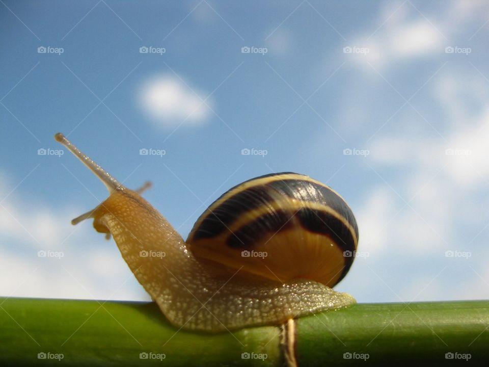 Slug in the sky | image, snail, blue sky, curious