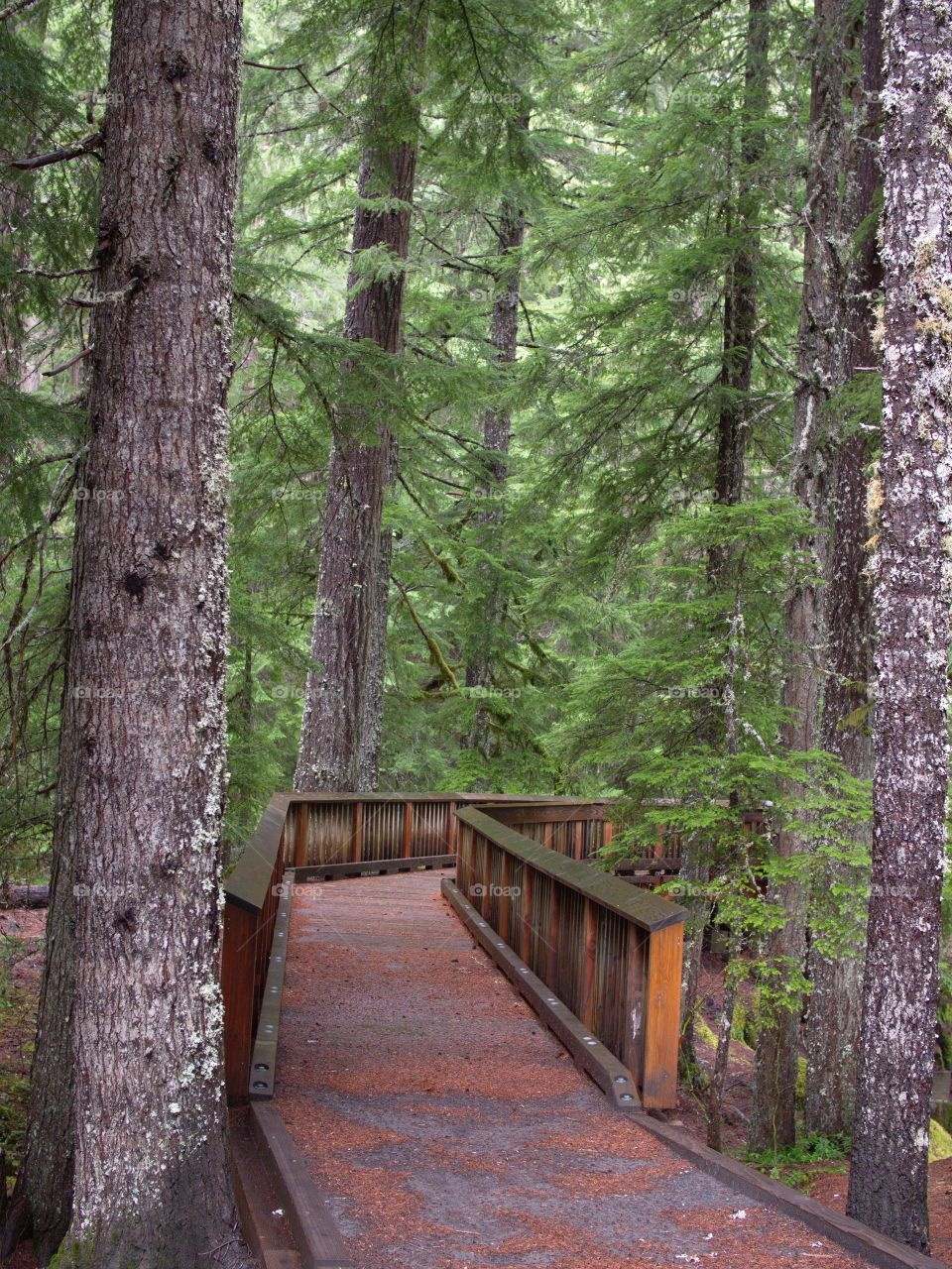 A wheelchair accessible wooden footbridge with sturdy rails leads through a beautiful forest to a viewpoint to look at Whitehorse Falls in Southern Oregon.