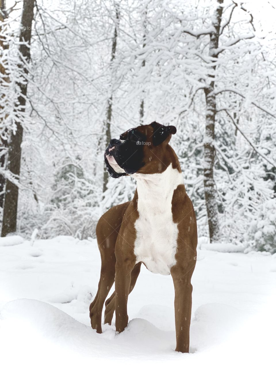 Stud in a snowstorm