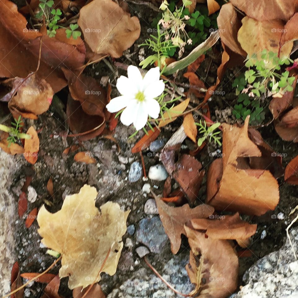 The Lone White Flower