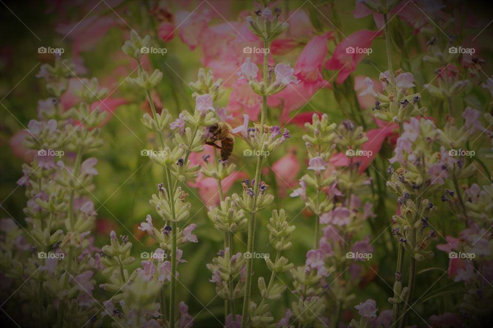 wildflower with bee