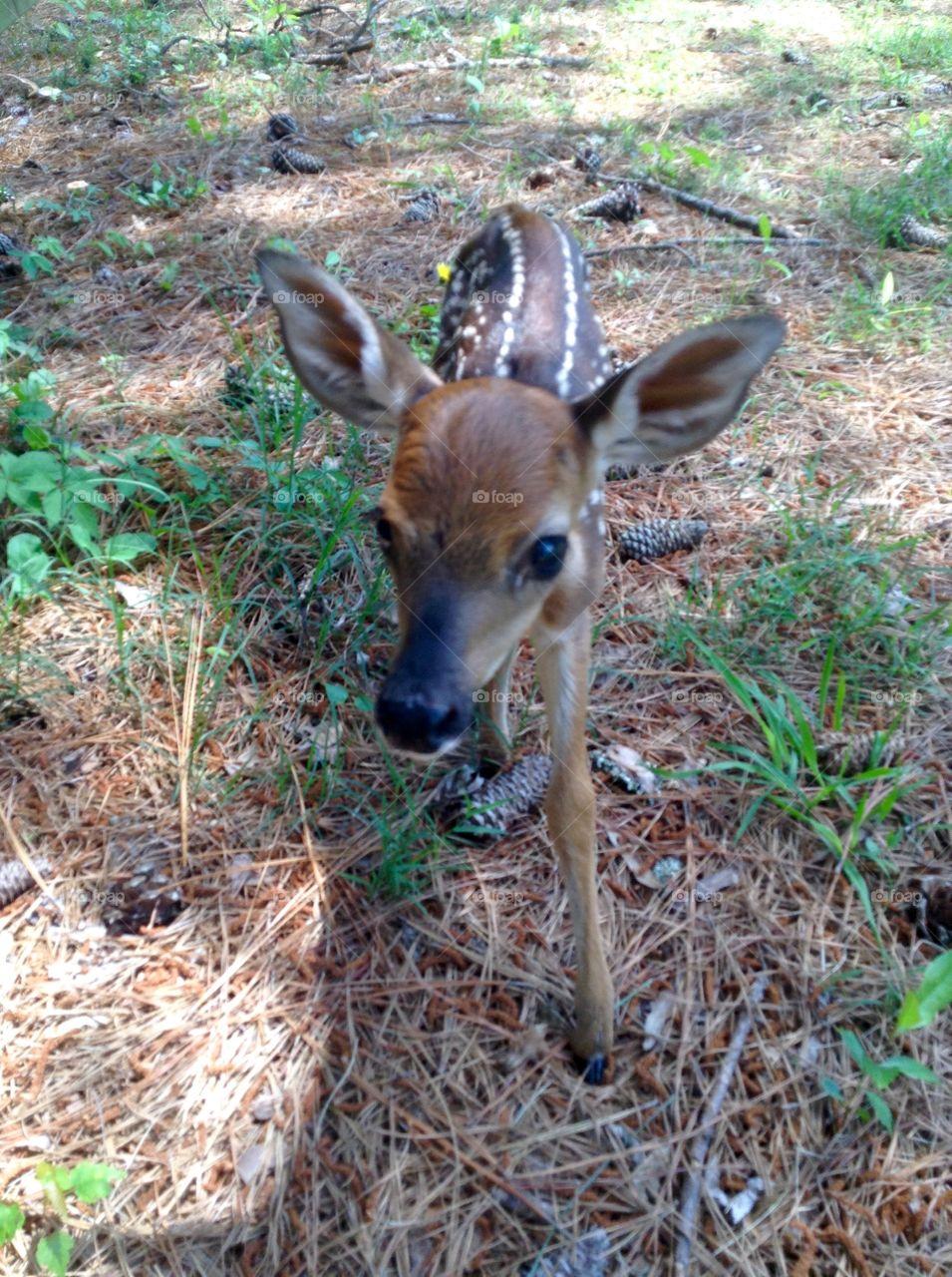 Mammal, Wildlife, Nature, Deer, Animal