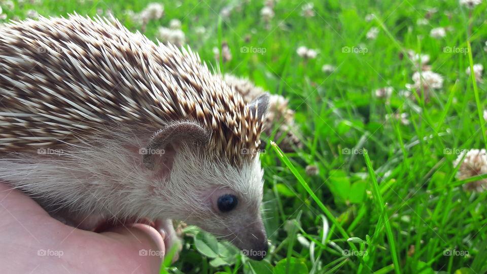 Grass, Nature, Little, Wildlife, Cute