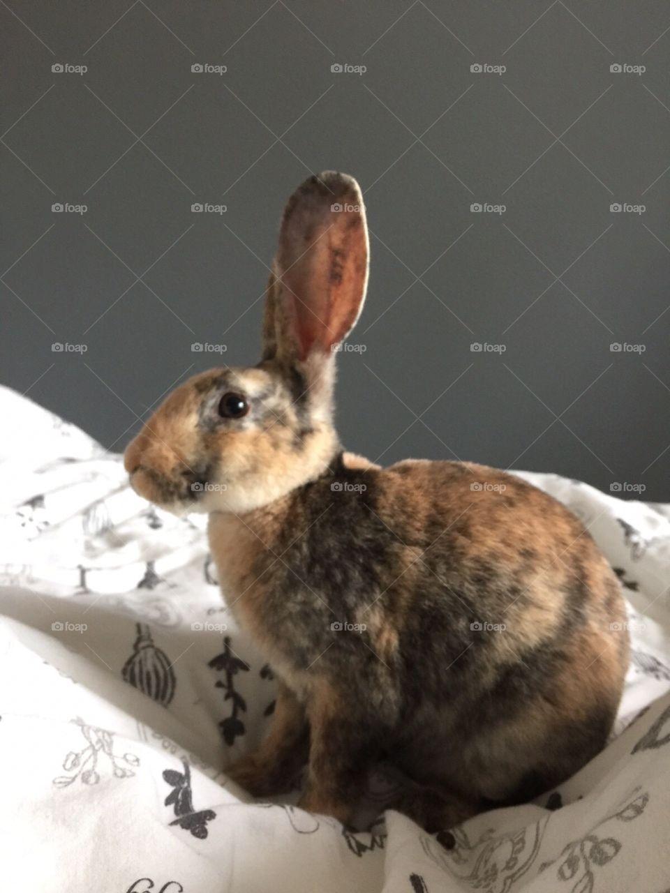 Rabbit. A lovely rabbit