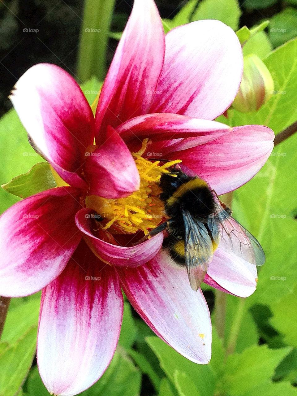 sweden garden flower insect by elluca