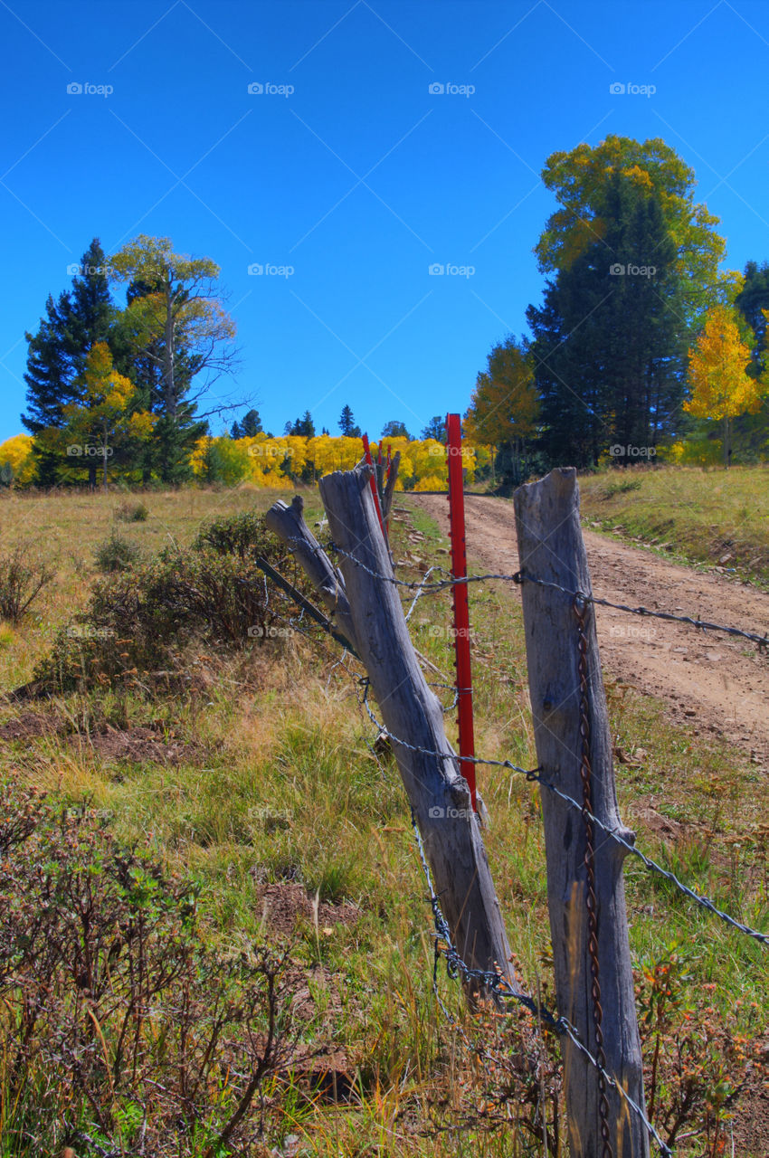 Fence Posts and Aspen. Fall shot near Taos, NM of a fence line with red posts and yellow aspens in the background.