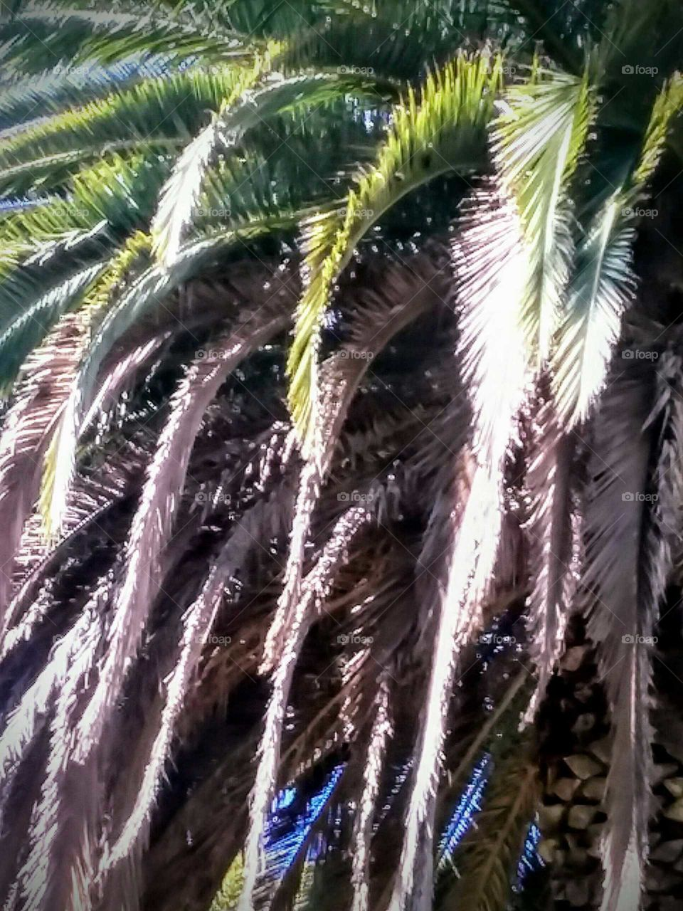 Close-up of Portion of a Palm Tree
