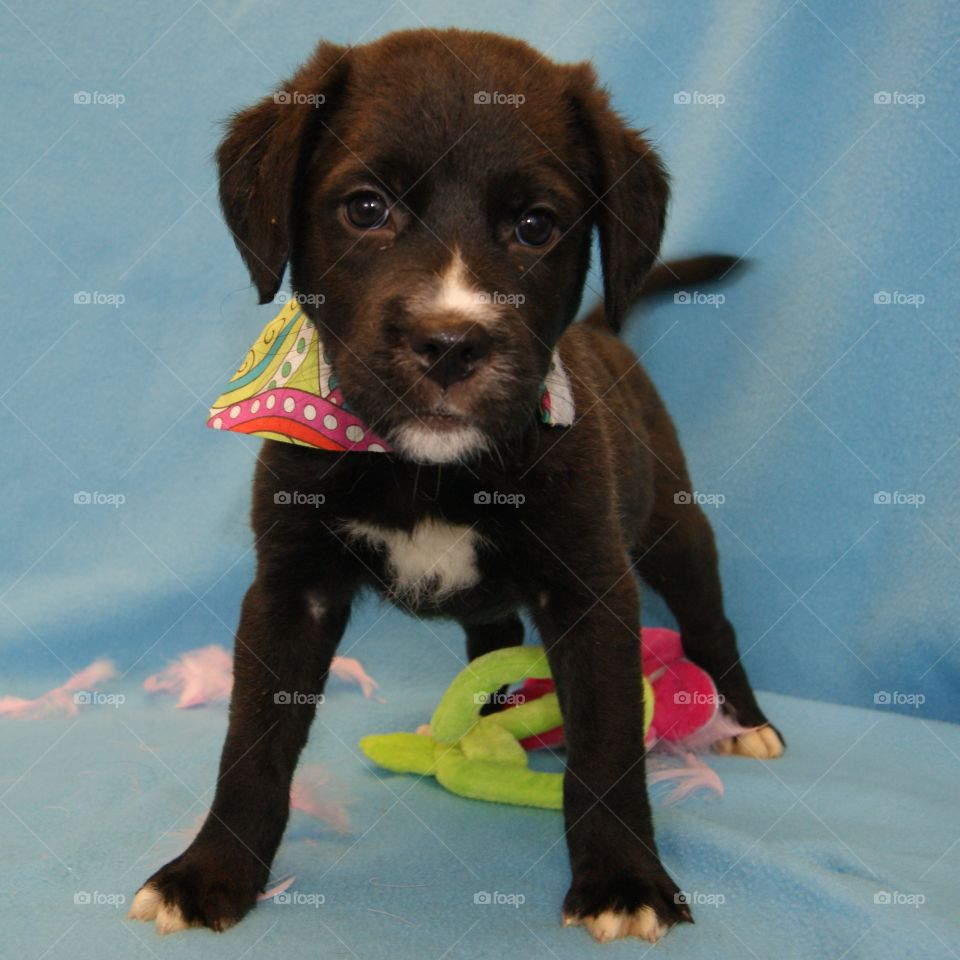Taking pictures of pups at a shelter for the website.